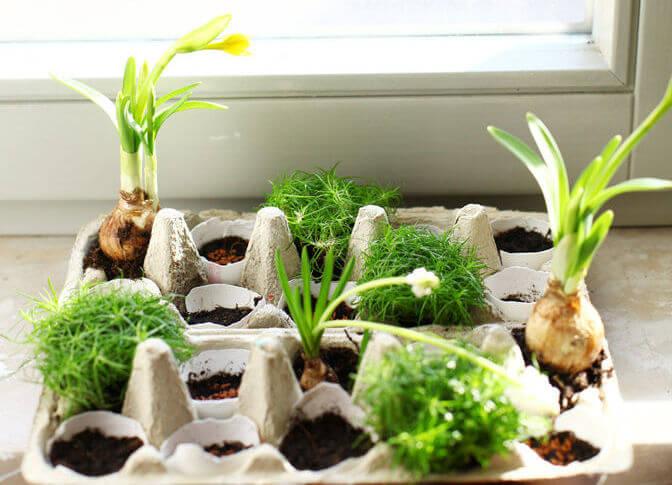 DIY Kräuter pflanzen