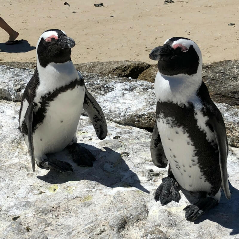 Pinguin Island